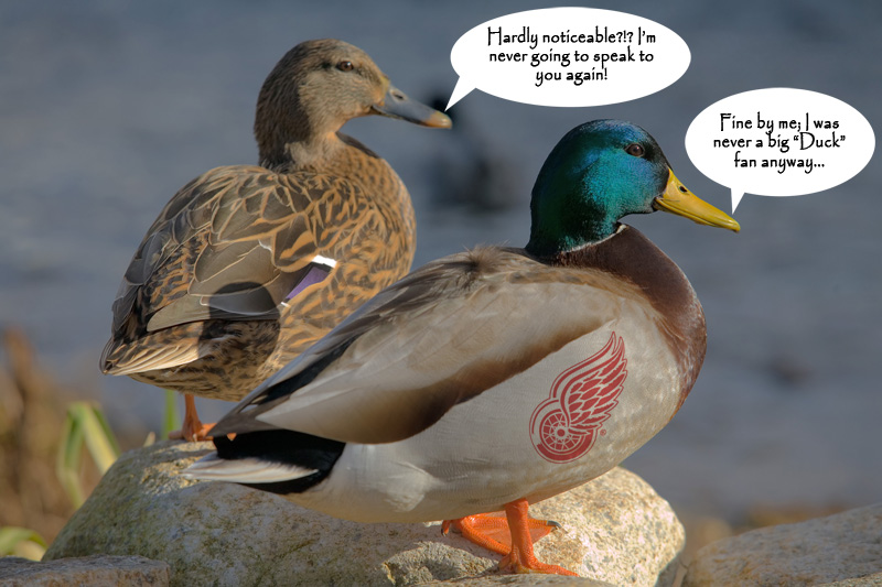 Ducks_Argument.jpg