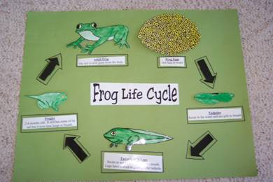 life cycle lesson plan 2nd grade plant life cycle lesson plans first grade and parts of a. Black Bedroom Furniture Sets. Home Design Ideas